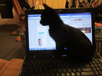 Shifty being really helpful!