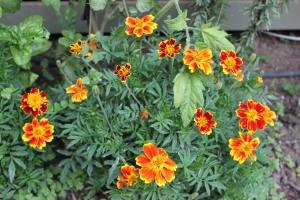 Flower comparison (1)