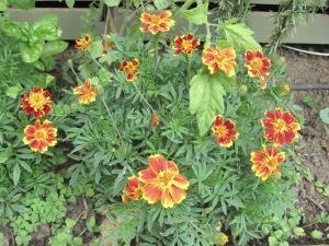 Flower comparison (2)